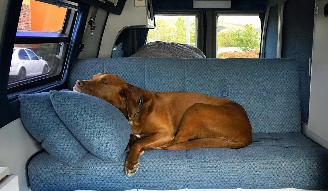 #SundayFunDay can often require a nap.  #VanDiesel provides... Photo: @shawnakorgan | #Sportsmobile #Dog #happytails | #ObieWanKorgNobie