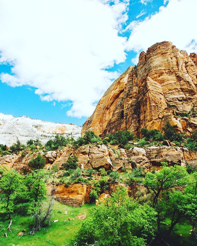 "#RADPARKS TAKEOVER @western.haikus got some things to share - > ""Zion National Park. Its like stepping into a time machine and viewing Earth from the prehistoric era. You feel as if a triceratops is grazing on the falling foliage from a recent flash..."