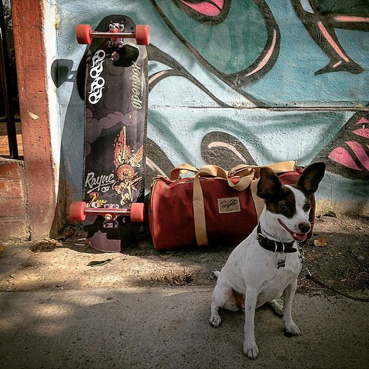 Little Pancito, the #deelite #rayneFORTUNE and @es.alvarocova are ready for the next skate trip! Keep the rubber side down. #4legs4wheels www.alvarocova.com @openboxstore