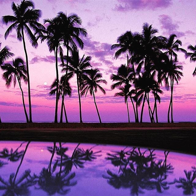 "ALWAYS WORTH TAKING TIME FOR A SUNSET tag your fave person to watch the sunset with  #mondaymantra #repost @snowflakespalmtreesandpretzels ""Palm Tree perfection via @qftravelinsider #hawaii #oahu #oahuhawaii #regram #palmtrees #islandlife #holiday..."