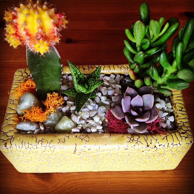 New #California #HousePlant // Thanks @thesucculence for the supplies & inspiration #succulentliving #cactus #succulence #bromeliad #urbangardening
