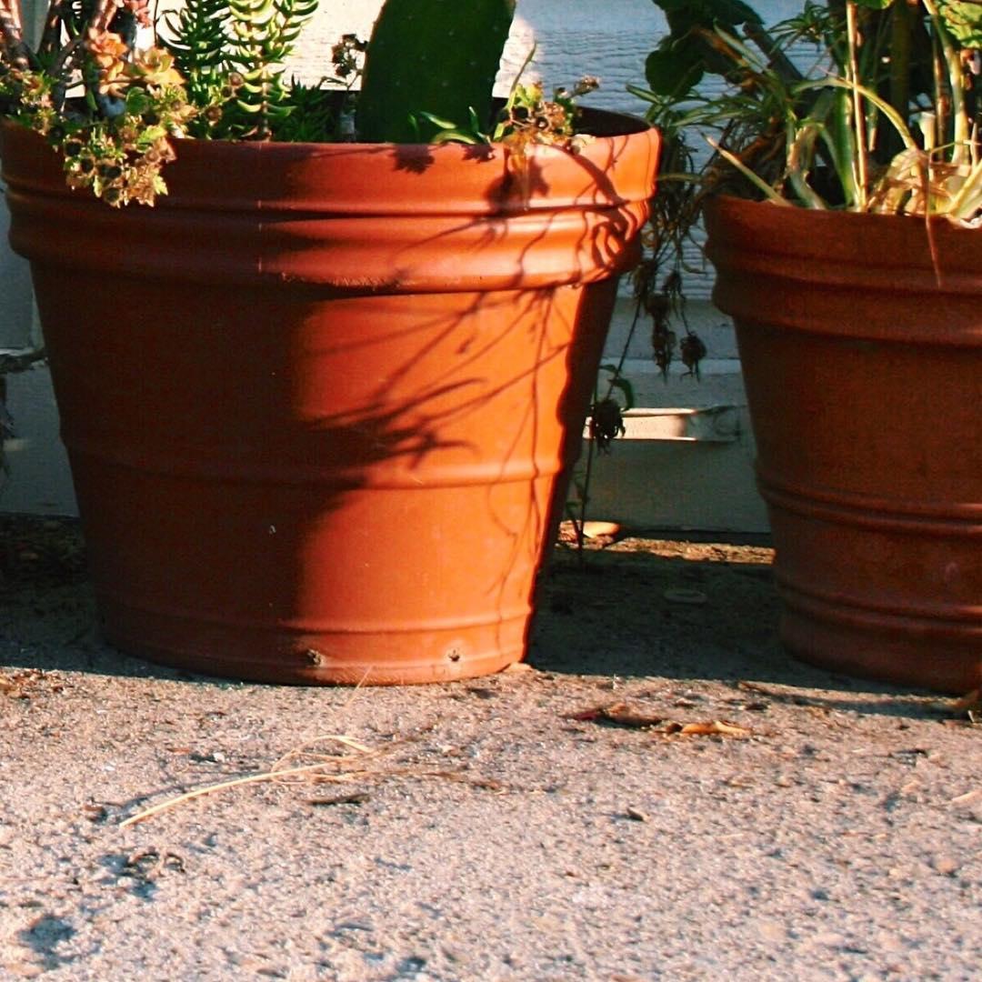 Aloe you Vera much. #