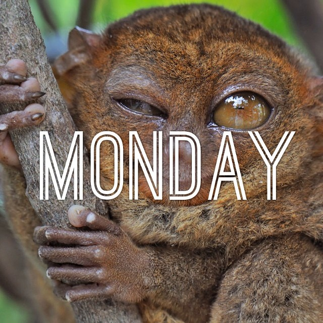 Oh Monday. #cuipo #saverainforest #monday