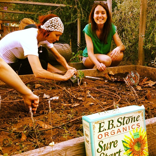 Wave Tribe sponsors organic garden!