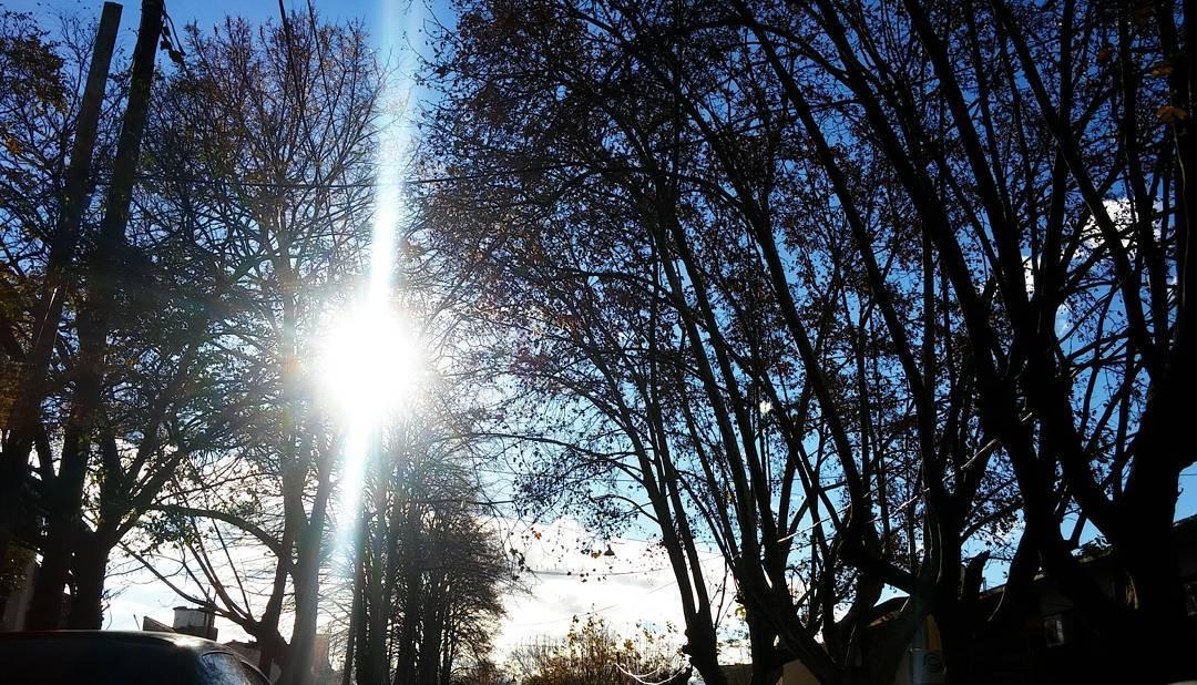 Bienvenido sol de otoñocasiinvierno. #adrogue #plazabynnon #photography #cielo #sky #contrast #arboles #trees