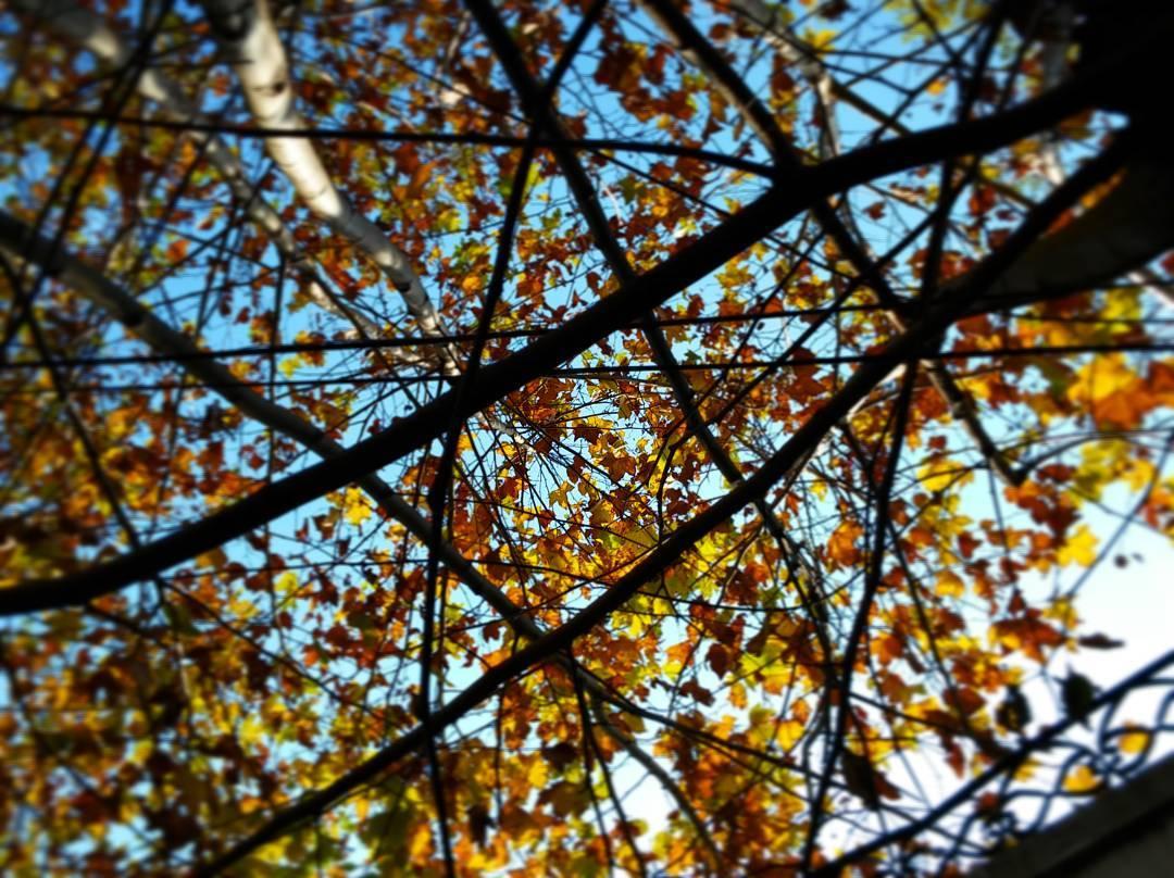 Las estrellas que guían siempre están. #ph #follage #hojas #arbol #tree #estrella #star #stella #lanús #autumn #sunday