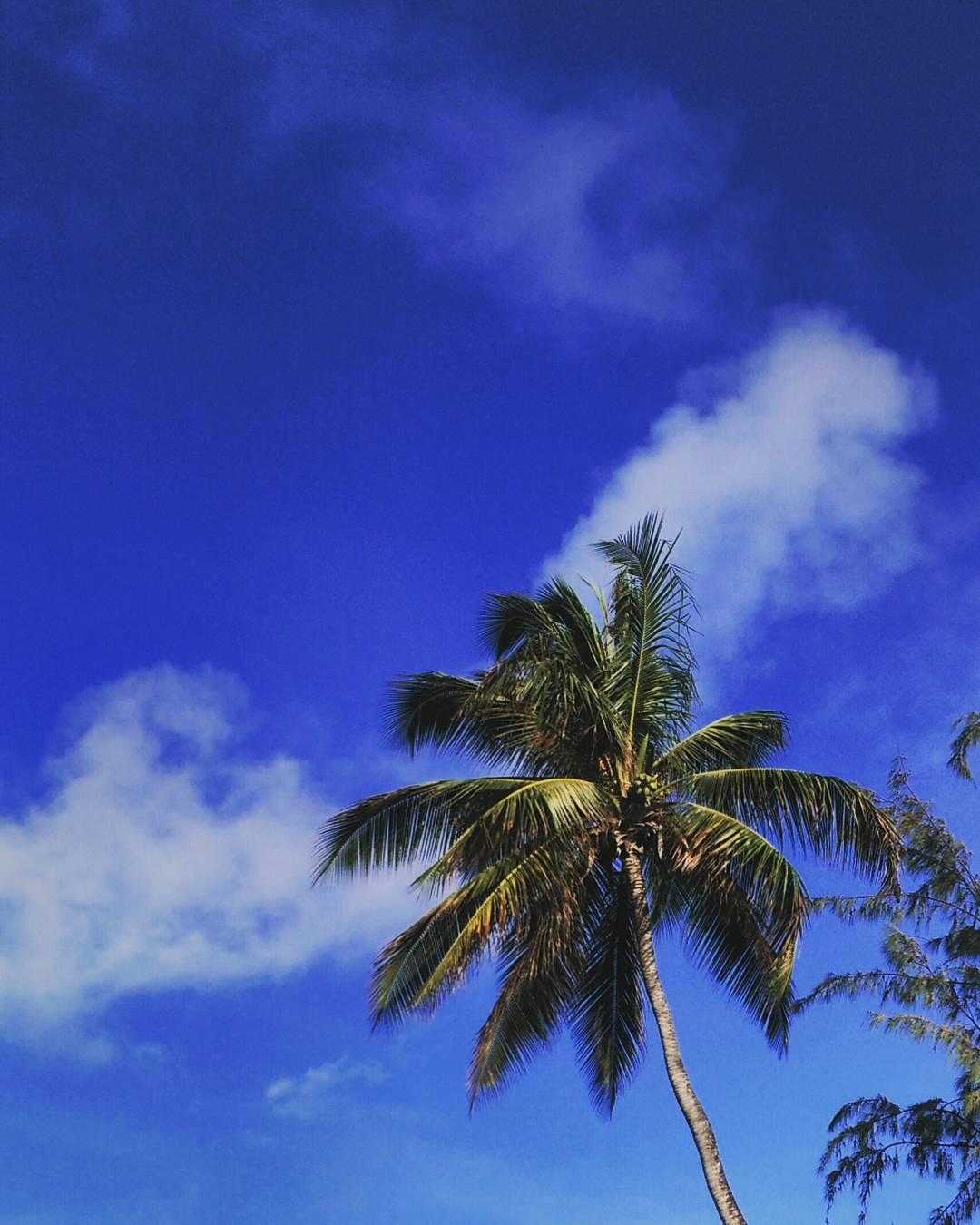 #AkelaSurf Office #morningview #barbados #tropical #paradise