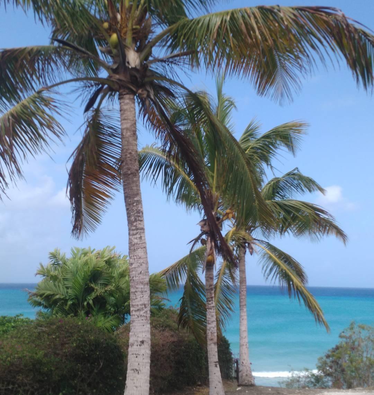 #AkelaSurf Morning view #barbados #freightsbay #barbados #tropical #paradise # home