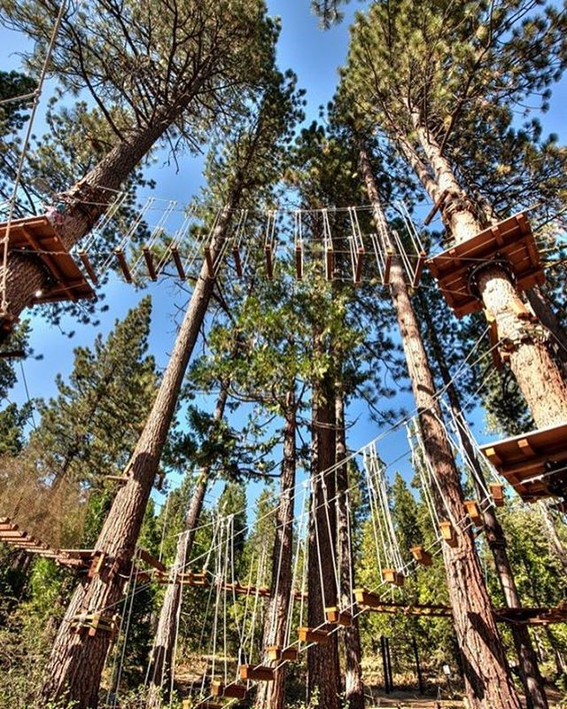 """Don't be pushed by your problems. Be lead by your dreams."" ~ Ralph Waldo Emerson // Dreamy treehouse complex by @fosterhunting #AllSwell"