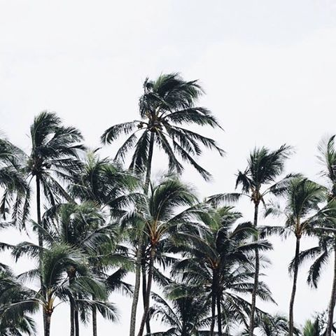 "The Dutch actually have a word for being over-scheduled, it translates as ""meeting sickness."" This short work week could look a lot like ""vergaderziete"" or it could look a lot like these palm trees chilling in the breeze. Creative productivity isn't..."