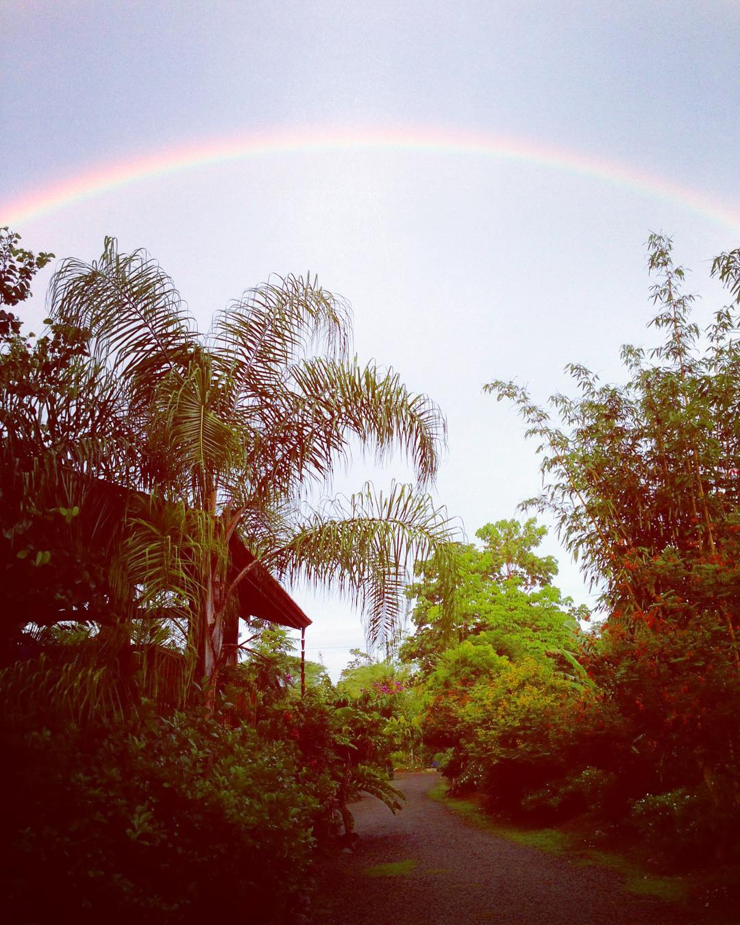 Perks of the rainy season: cooler evenings, much needed water for the plants, and of course, that ever-elusive rainbow! #MotherNatureMonday