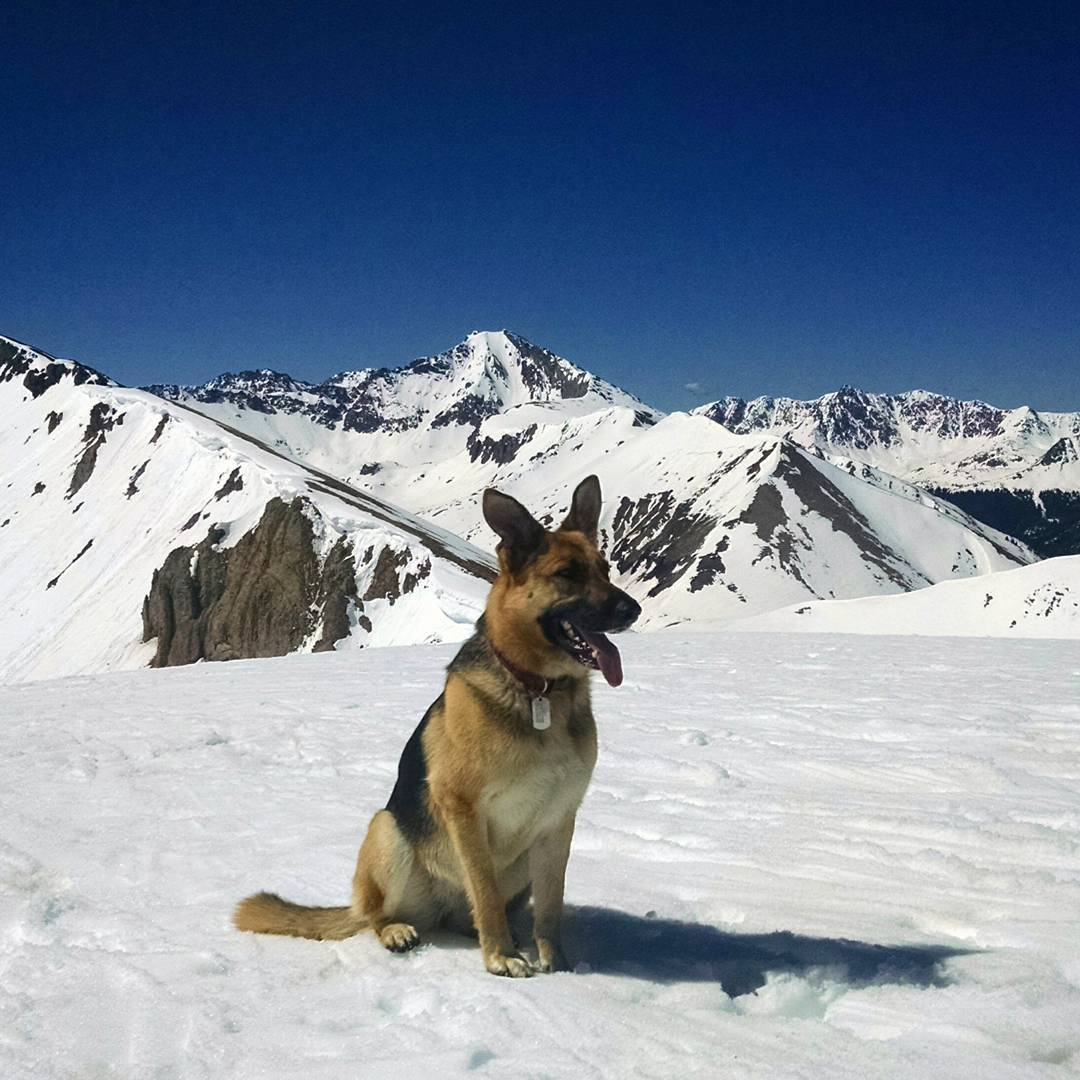 Folsom ambassador Lucy getting the goods on #independencepass today. #gsd