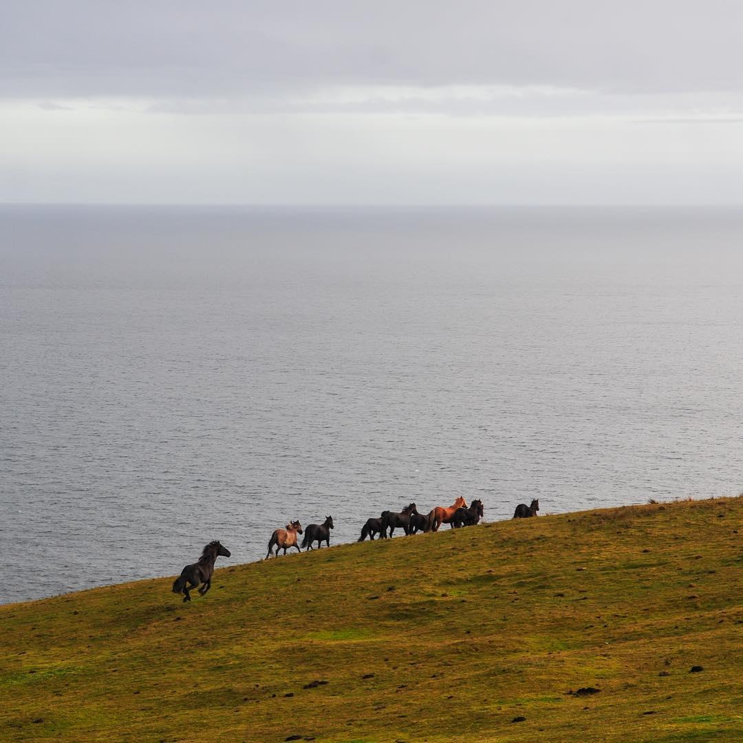 Nos cruzamos con muchos caballos salvajes en #PeninsulaMitre, que antes pertenecían a Estancias que hoy no existen #JustPassingThrough @reefargentina