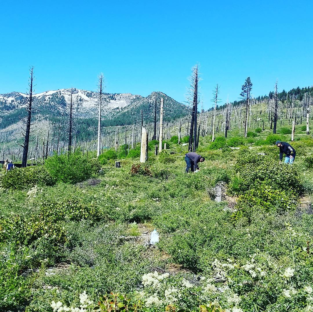 Fun times planting and watering trees for the Sugar Pine Foundation! #getoutside #volunteering #xplorewild #laketahoe #graniterocx #outdoorsrocx