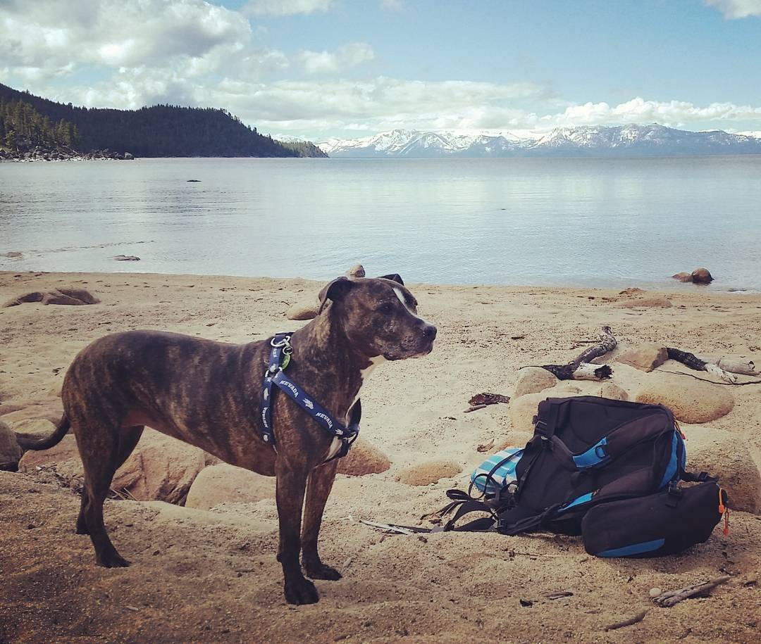 Beach time with the pup.  #getoutside #laketahoe #beach #pups #renotahoe #xplorewild #backpacks #coolers #graniterocx #outdoorsrocx