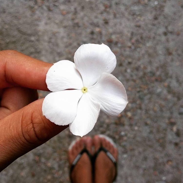 #TôDeHavaianas #HavaianasMoment #VoyConHavaianas #flower @_rapha_araujo