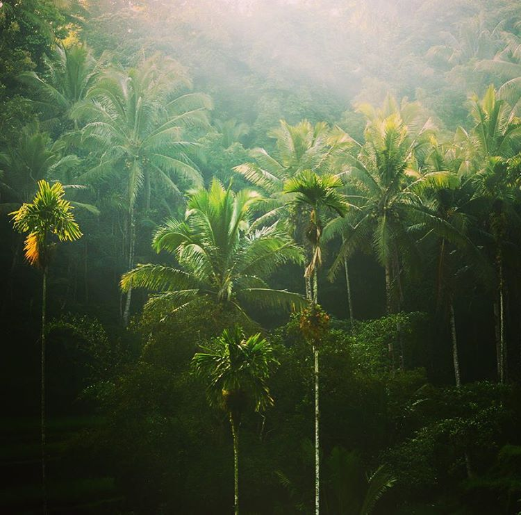 Back in the magical land of rice paddies, coconuts, and epic waves.