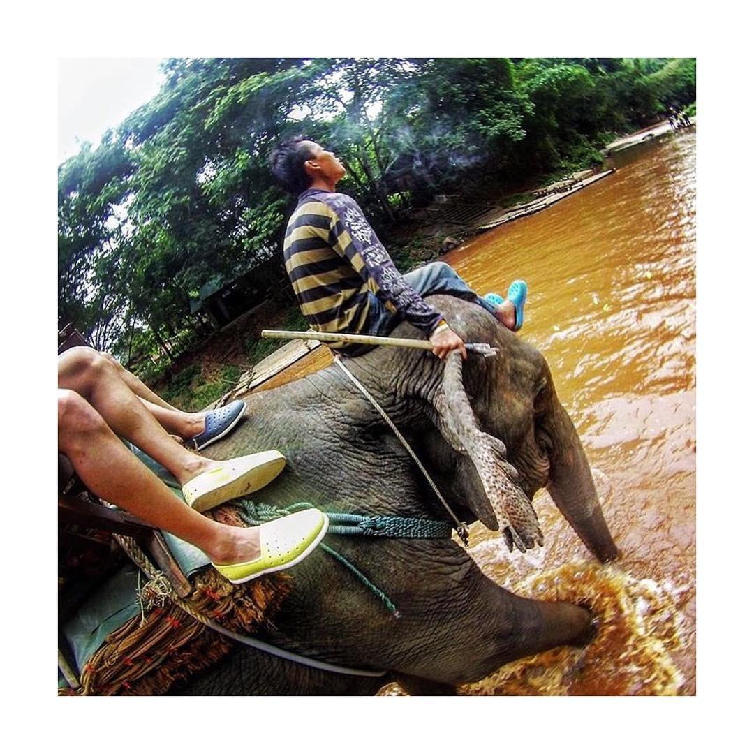 @peri_mesquita82 llevó sus #HUMMS a pasear en Elefante por Tailandia.