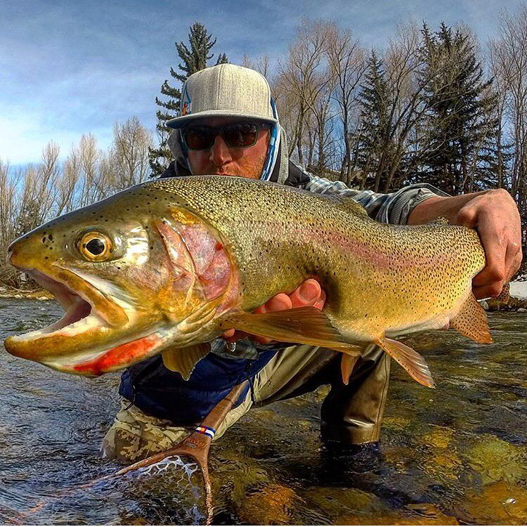Live Your Dream.  @kingpin_angler with a beautiful cutthroat.  Tag #kinddesign in your photos to win free swag! #colorado #flyfish #trout #liveyourdream