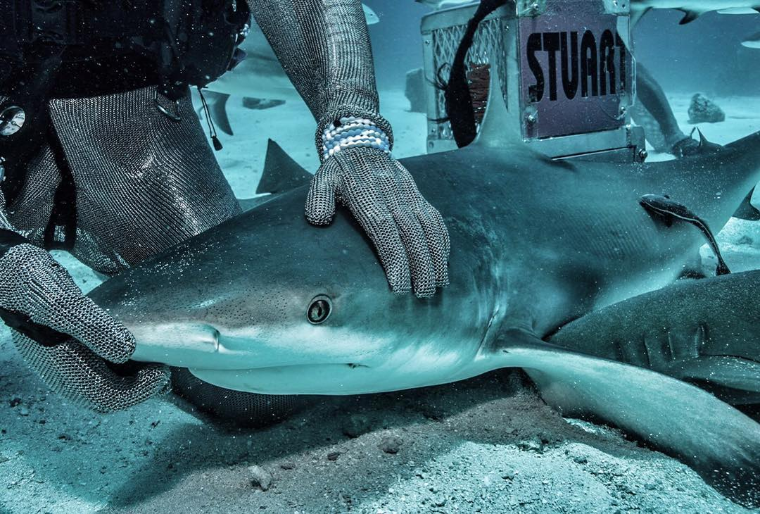 """I love sharks because they let me share their world. They welcome me to their home and let me be part of it""- @piachichile #sharkweek"
