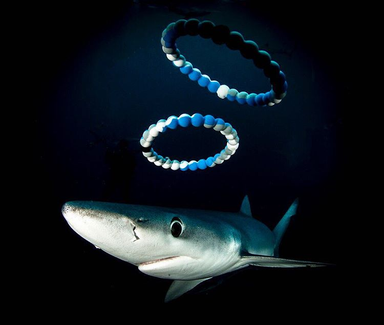 Don't be in the dark, head to Lokai.com/charity to learn what you can do today to save our sharks! #sharkweek