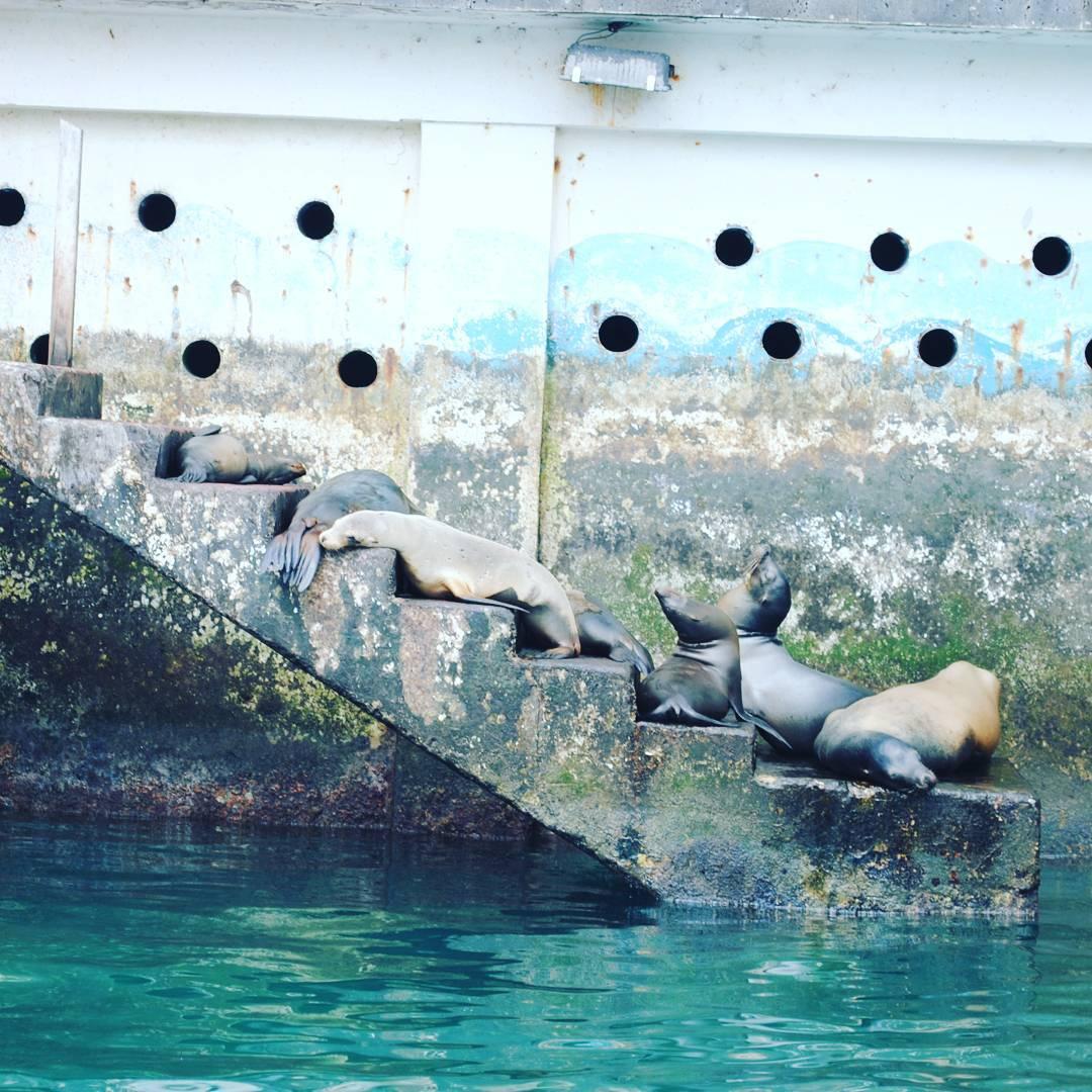 No trespassing. Locals Only! Ellos son los verdaderos locales en San Cristóbal, Galápagos. #maetuanis #surf #surfing #galapagos #islasgalapagos #sancristobal #localsonly