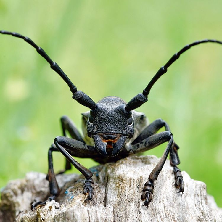 Today is the Mondayest Tuesday ever...looking forward to this #ShortWeek. #Cuipo #SaveRainforest #Beetle #Buglife
