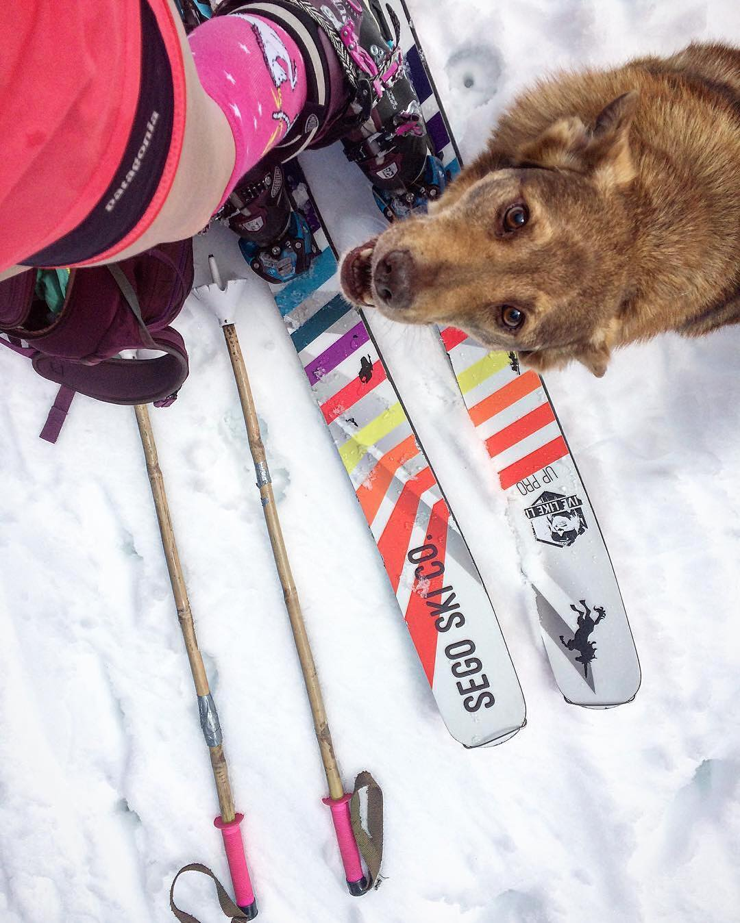 You ready to go, or what?! Promo code SUMMER25 = 25% OFF at PandaPoles.com!  Repost: @meaghann_gaffney  #PandaPoles #Skiing #PandaDog #TribeUP!