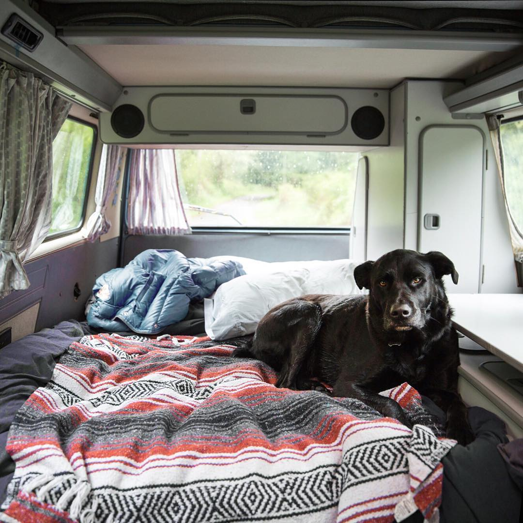 Boogie, most regal of the Peak Design dogs, at home on the road. #findyourpeak