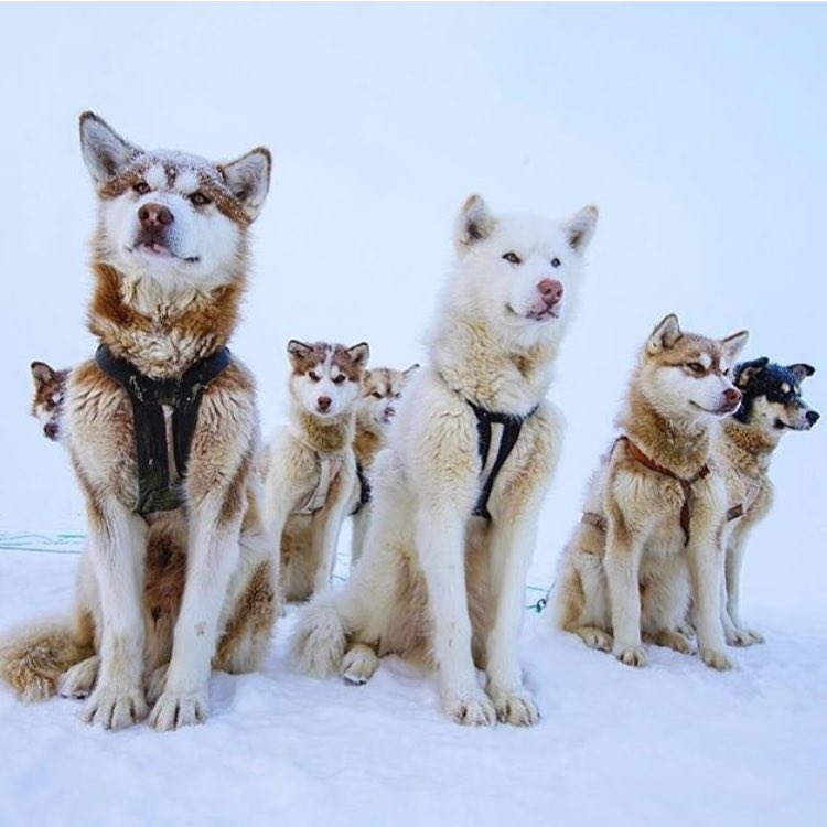 It's nice to have a squad. Especially if they are a little Husky.