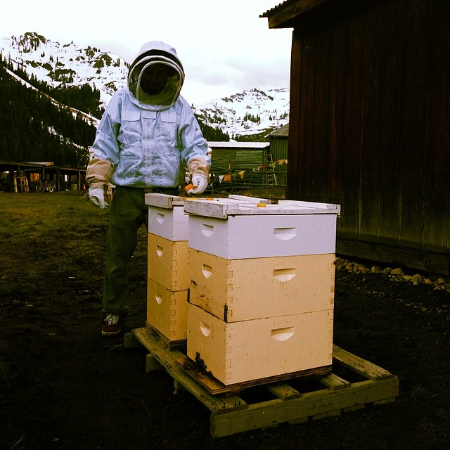 'Happy BEESter ~ 04.20.14' Our latest and greatest project. Just introduced two new hives to Squaw Valley. #beehaven #tahoemade #420 #honeycomb