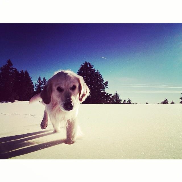 'Companionship ~ 03.26.24' #tahoemade #whatsupdawg