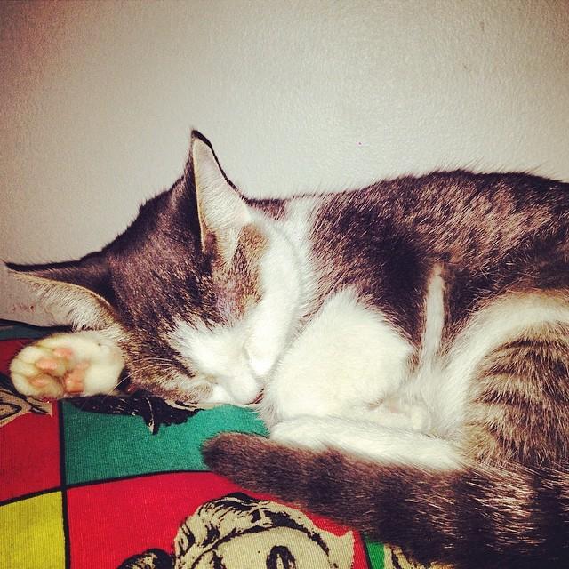 Asi trabajamos @tintoysoda #cat #kitten #urbanlife #urbanroach #urbancheando