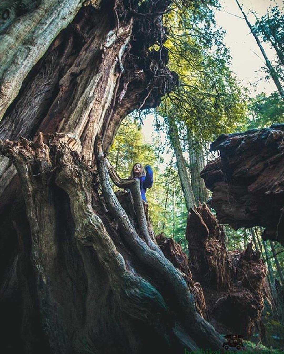 @melanie_noelani exploring Olympic National Park.