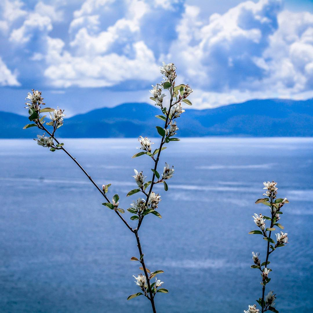 May blossoms make June awesome. _ #thisistahoe #tahoemade