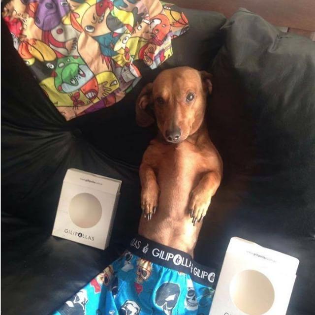 Se entero de nuestras promos del día del padre y no pudo resistirse!!… vos también podes comprar los tuyos en www.gilipollas.com.ar #gilipollas #dog #underwear #díadelpadre