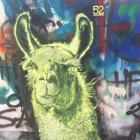 @g52cube • Happy Saturday! • #spratx #art #streetart #austintx #hopeoutdoorgallery #llama #atx #stencil #g52
