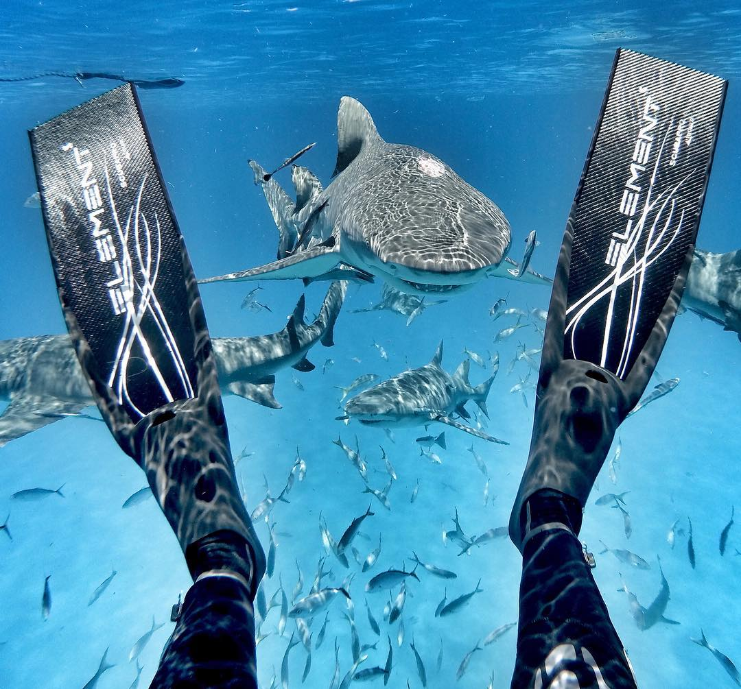 @GoPro Featured Photographer - @abc4explore Andy Casagrande  About the Shot: Shark Fins - Sometimes you just gotta kick-back, relax and put things into perspective ;-) From my perspective, sharks are quite polite, charismatic & intelligent predators -...