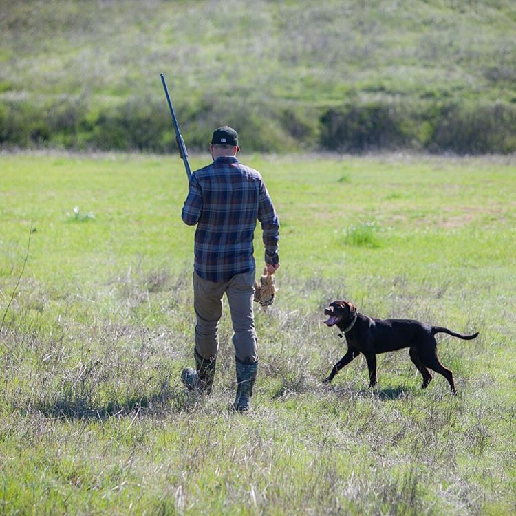 The buddy system. #huntingdog #birddog #flannel #pladra #training
