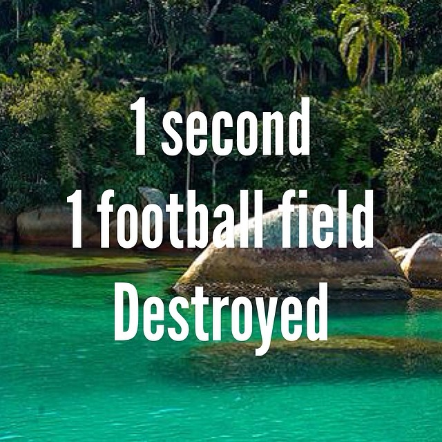 Every second 1 football field is destroyed. #cuipo #saverainforest #stopdeforestation