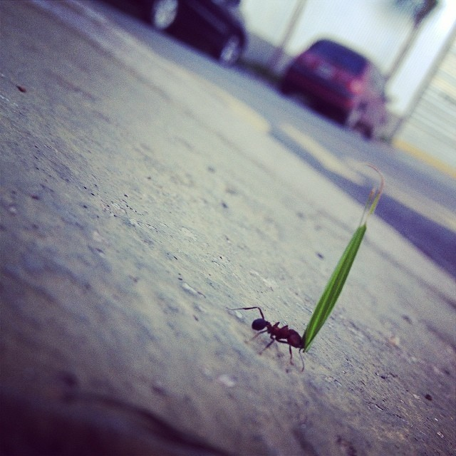 Abasteciendo para el invierno. Pequeñita hormiguita