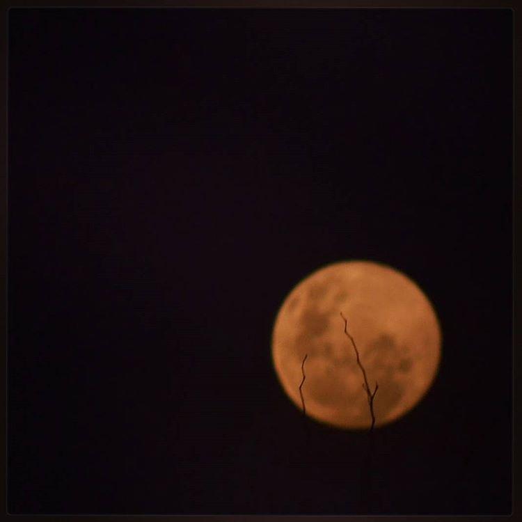 La pequeña testigo de millones acontecimientos. En esta oportunidad, agrietada por unas ramas de un arbol.  #all_my_own #arte_of_nature #agean_fotografia #buenasnoches #creacion #d3100 #earthpix #fotografia #ig_great_pics #ig_argentina #lunallena #luna...