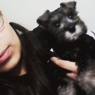Ona ❤  #perrita #dogsofinstagram #dog #doggy #puppy #baby #cachorro #hermosa #cute #pet #cutie #schnauzer #schnauzersofinstagram
