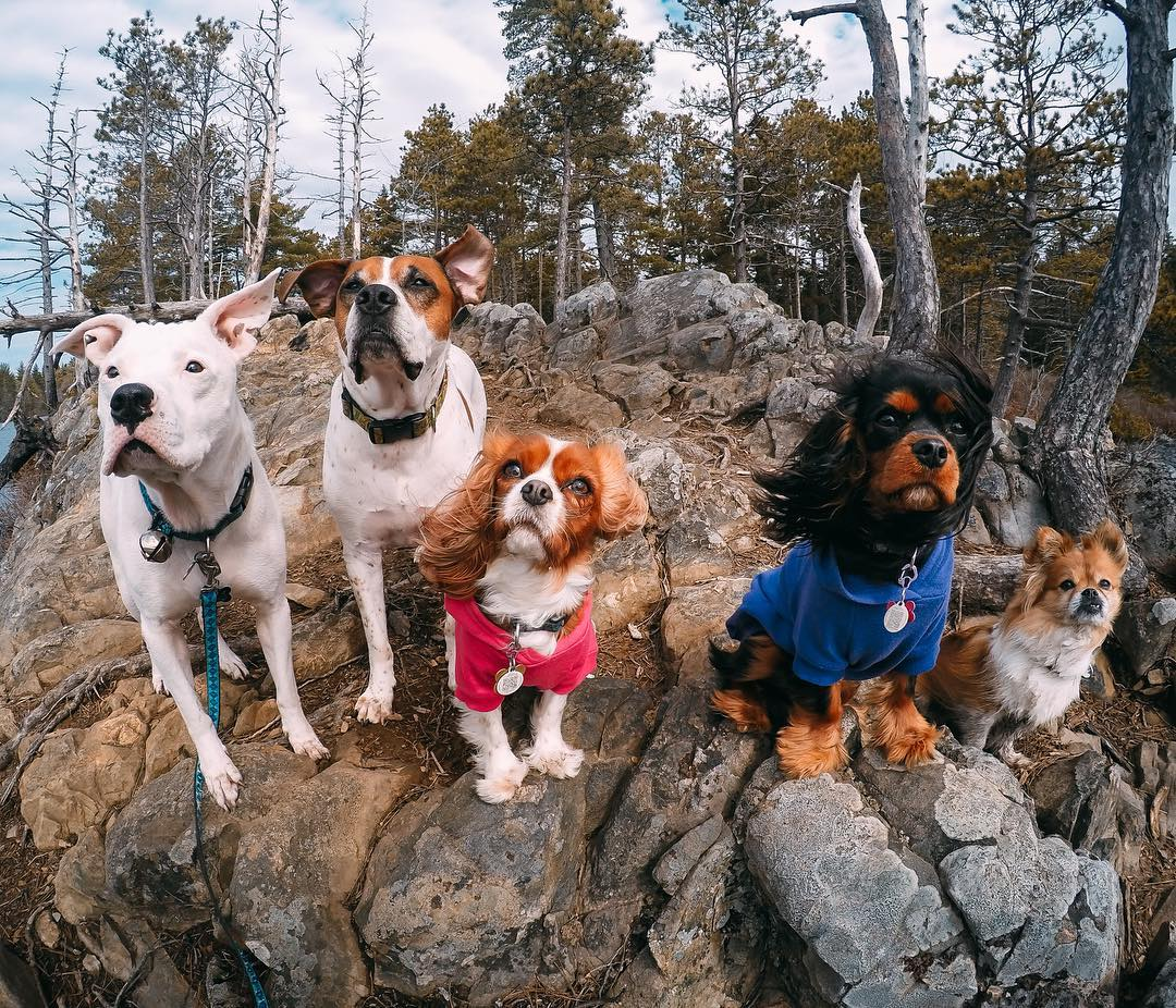 Photo of the Day! @callofthewildcanineservices has the whole team lined up! Which dog is your favorite? Tag your #squad and share with us via link in our bio! #GoPro #GoProPets #Dogs #DogsofInstagram #Squadgoals #HaironPoint
