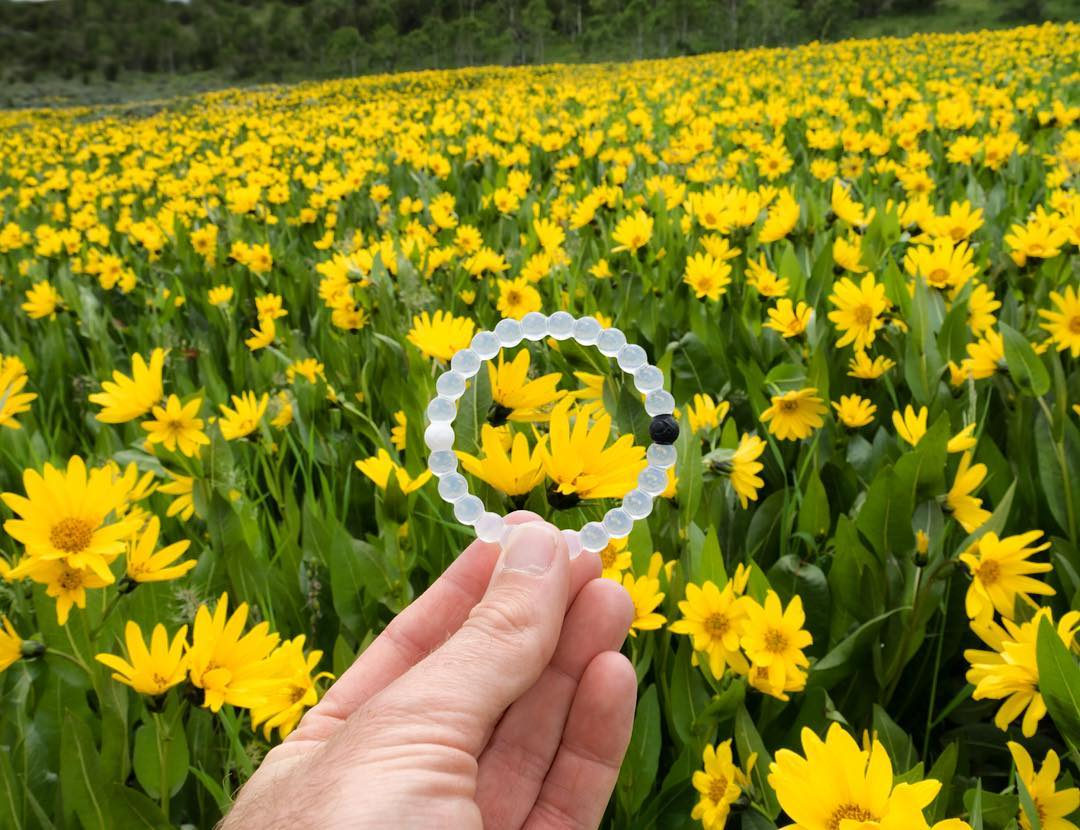 Plant the seed of an idea and watch it grow #livelokai