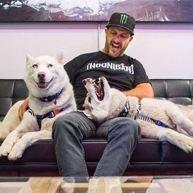 I love hanging out with these two fur bombs after a long time on the road. Both are showing their support with their fresh 2016 Hoonigan Racing by Felipe Pantone livery collars and harnesses from @WolfgangManandBeast. Thanks to Wolfgang for keeping...