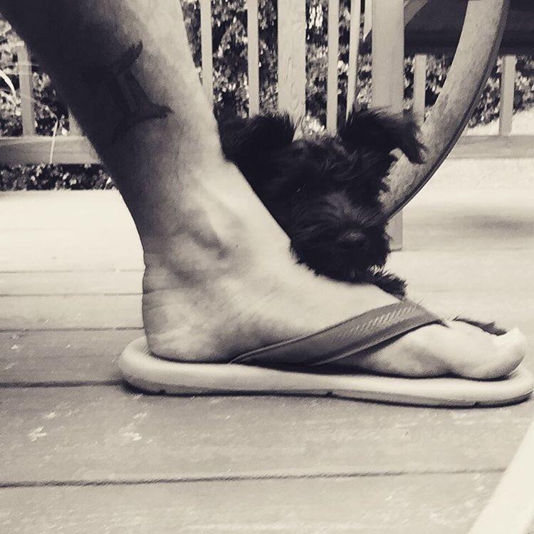 #TôDeHavaianas #HavaianasMoment #VoyConHavaianas #pets @mcon529