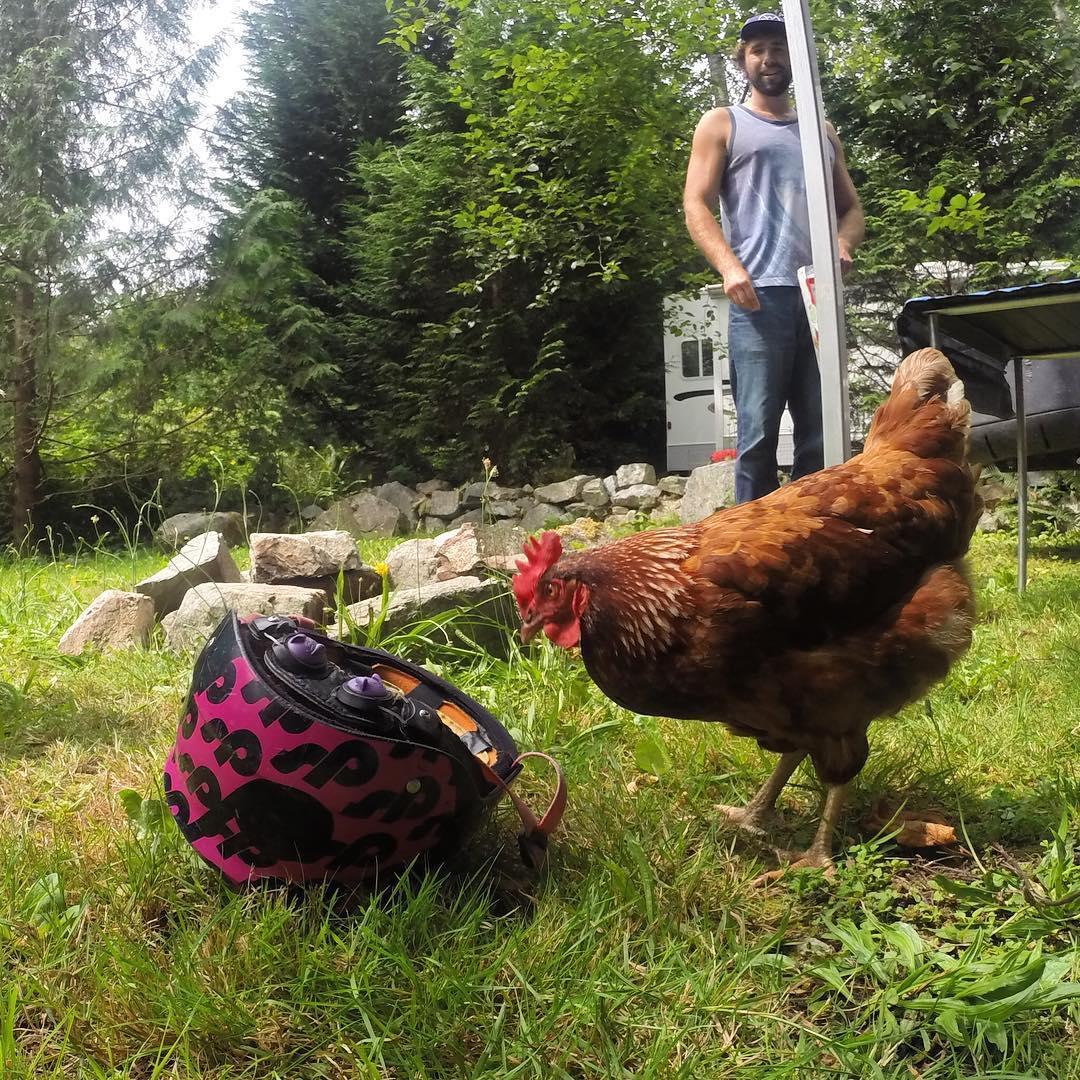 We ain't chicken. #cuzrockshurt #shredready