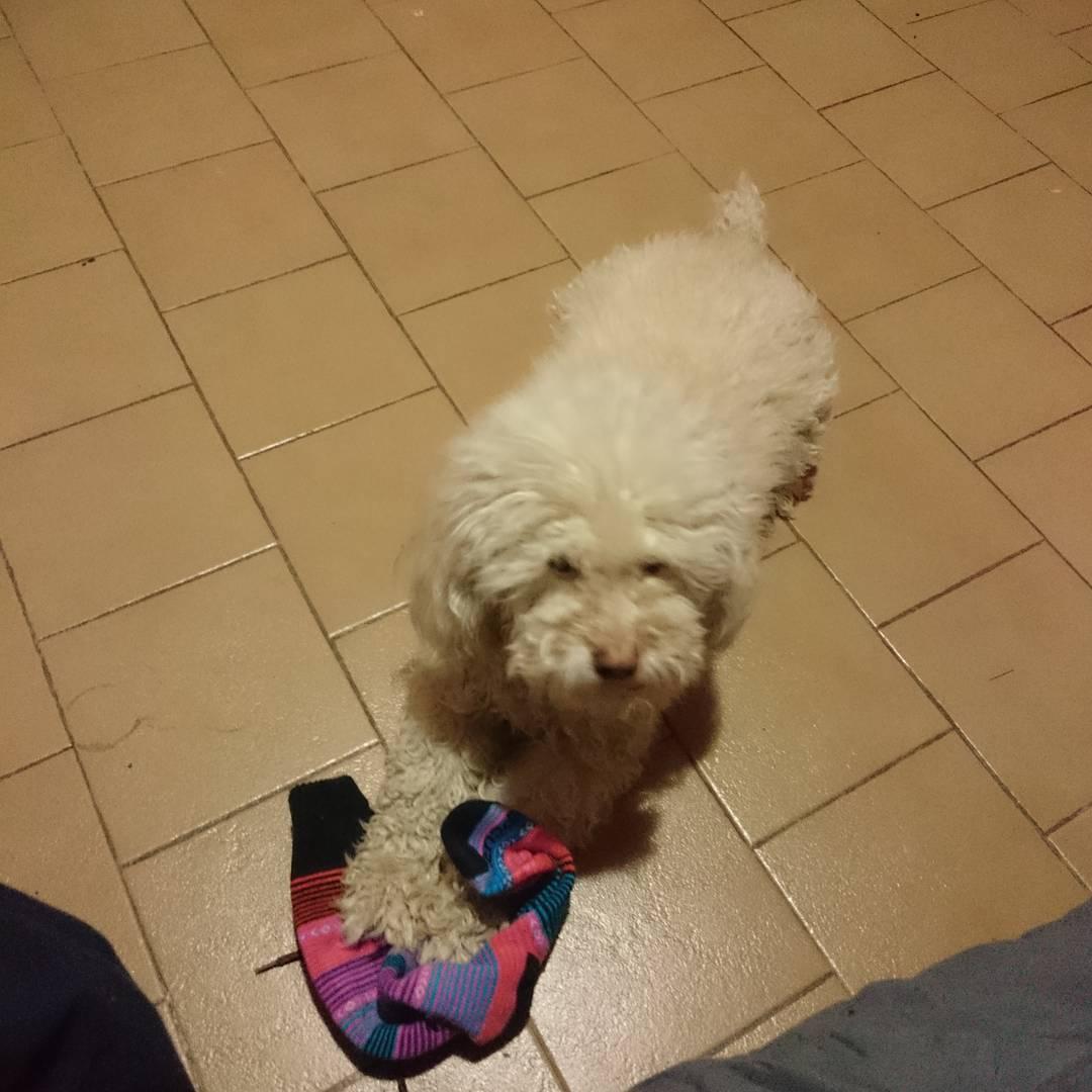 Encontré la que roba mis medias