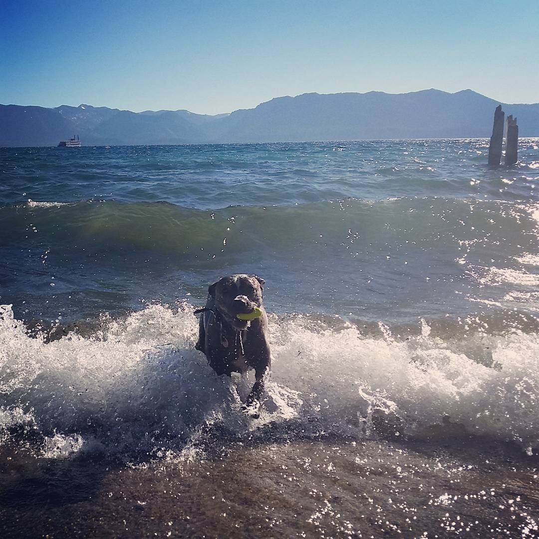 Jill riding in some waves on a windy afternoon at the beach! #getoutside #laketahoe #tahoesouth #tahoesnaps #renotahoe #pups #beach #xplorewild #graniterocx #outdoorsrocx